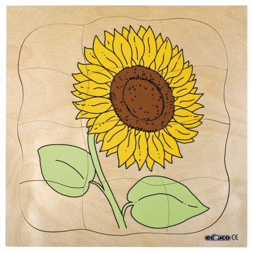 GROWTH PUZZLES SUNFLOWER - ภาพต่อ การเจริญเติบโตของดอกทานตะวัน