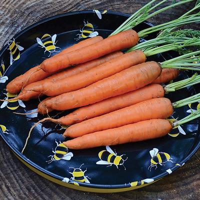 Nectar Carrots (เเครอทเน็กต้าร์)