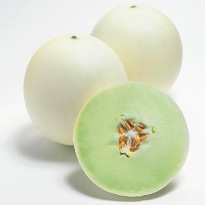 Honeycomb Melon (ฮอนนี่คอมพ์ เมล่อน)