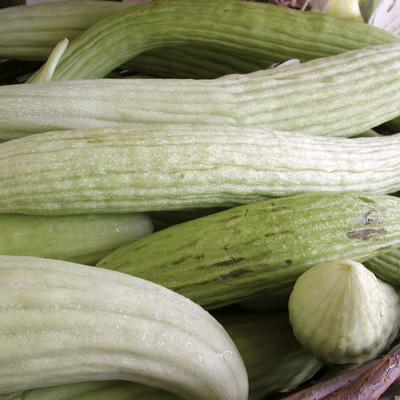 Armenian Cucumbers (แตงกวายาว)