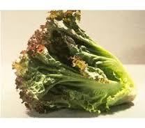 """สลัด""""ไพรซ์เฮด"""" (Prizehead Lettuce) / 20 เมล็ด"""