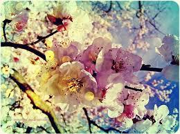 หัวน้ำหอมกลิ่นbeauty blossom : 002443