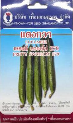 แตงกวาญี่ปุ๋น เพรตตี้ สวอลโล่ cucumber เพื่อนเกษตร